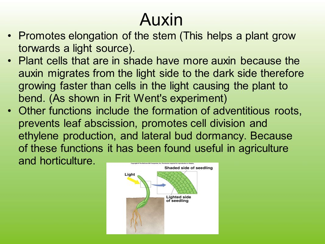 Auxin Promotes elongation of the stem (This helps a plant grow torwards a light source).