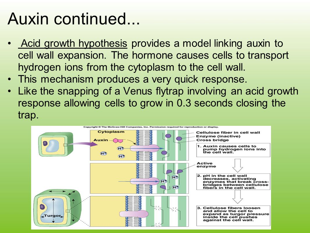 Auxin continued...