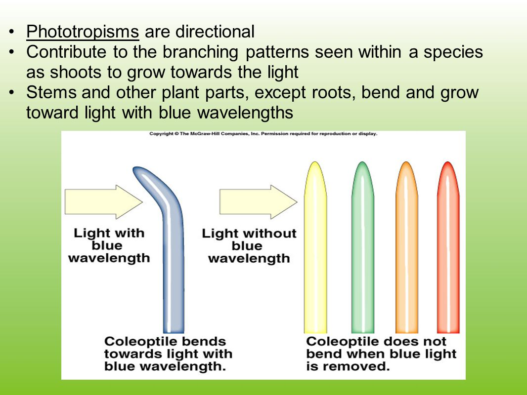 Phototropisms are directional
