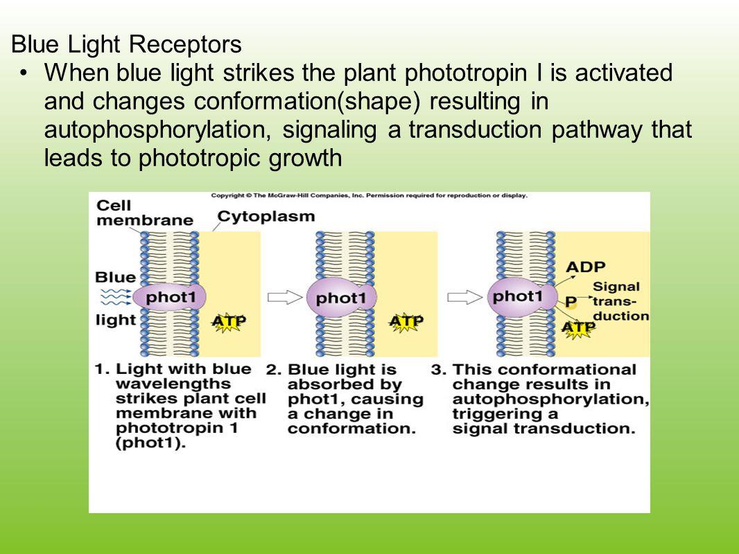 Blue Light Receptors