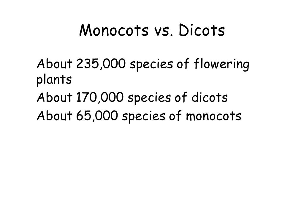 Monocots vs. Dicots About 235,000 species of flowering plants
