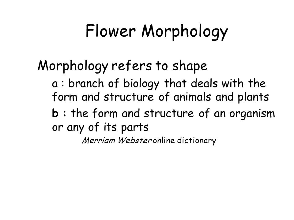 Flower Morphology Morphology refers to shape