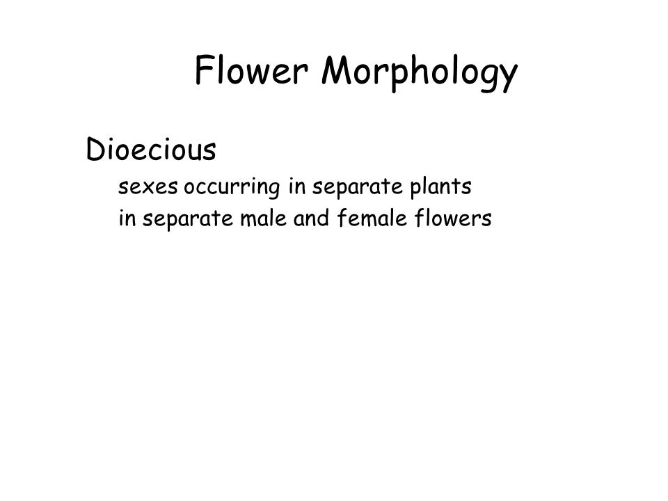 Flower Morphology Dioecious sexes occurring in separate plants