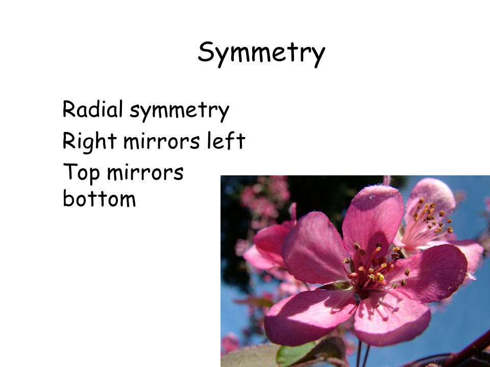 Symmetry Radial symmetry Right mirrors left Top mirrors bottom