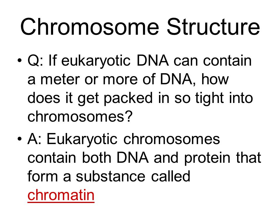 Chromosome Structure Q: If eukaryotic DNA can contain a meter or more of DNA, how does it get packed in so tight into chromosomes