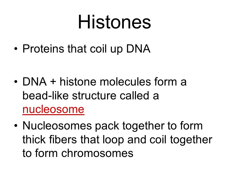 Histones Proteins that coil up DNA