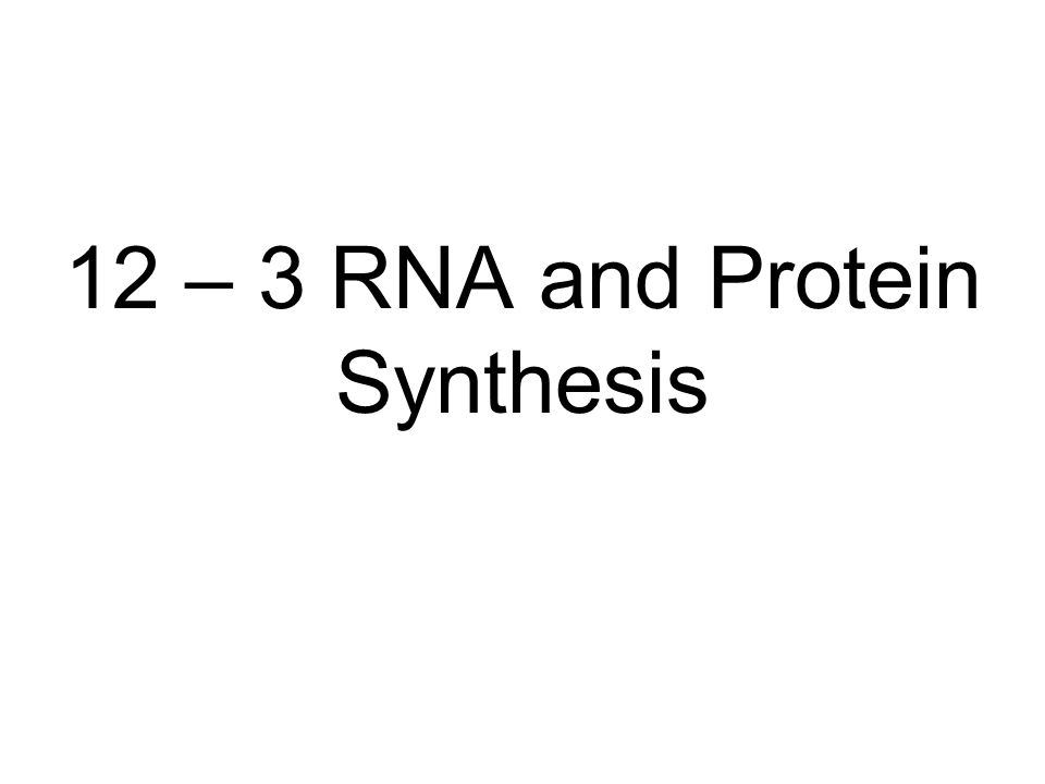 12 – 3 RNA and Protein Synthesis