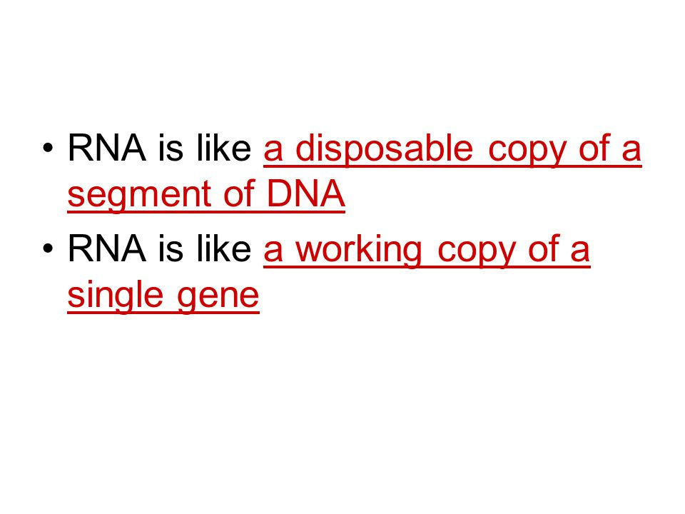 RNA is like a disposable copy of a segment of DNA