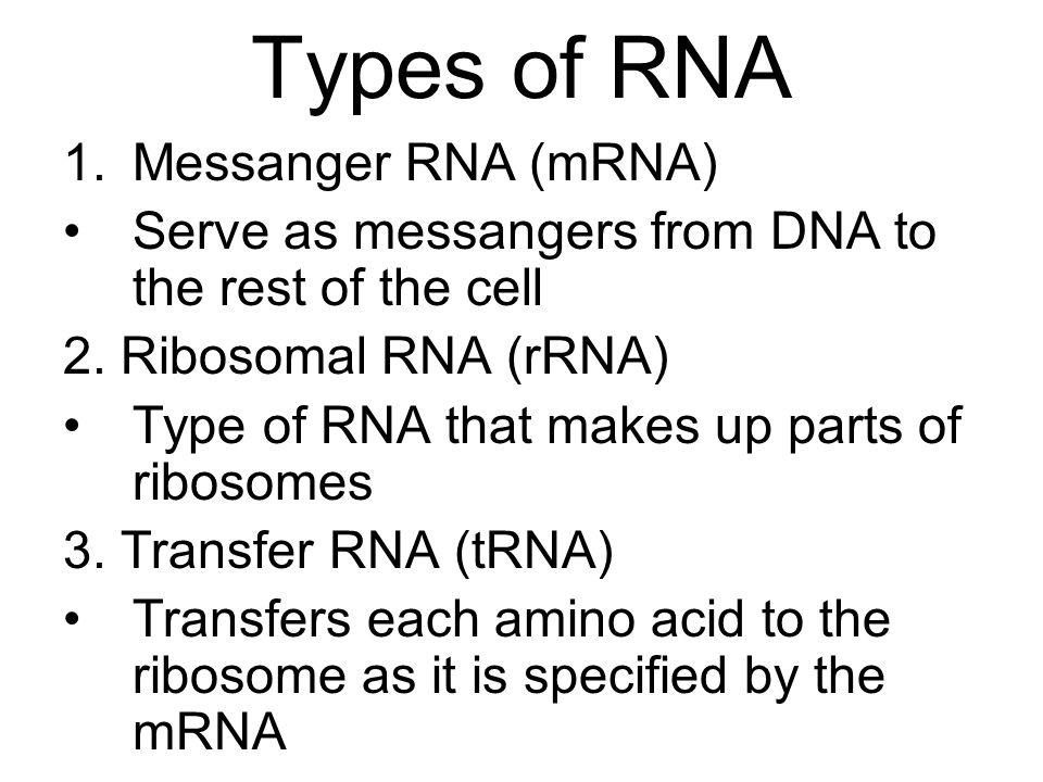 Types of RNA Messanger RNA (mRNA)
