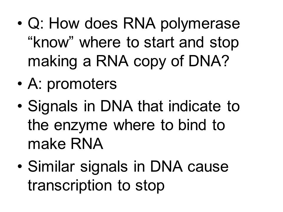 Q: How does RNA polymerase know where to start and stop making a RNA copy of DNA