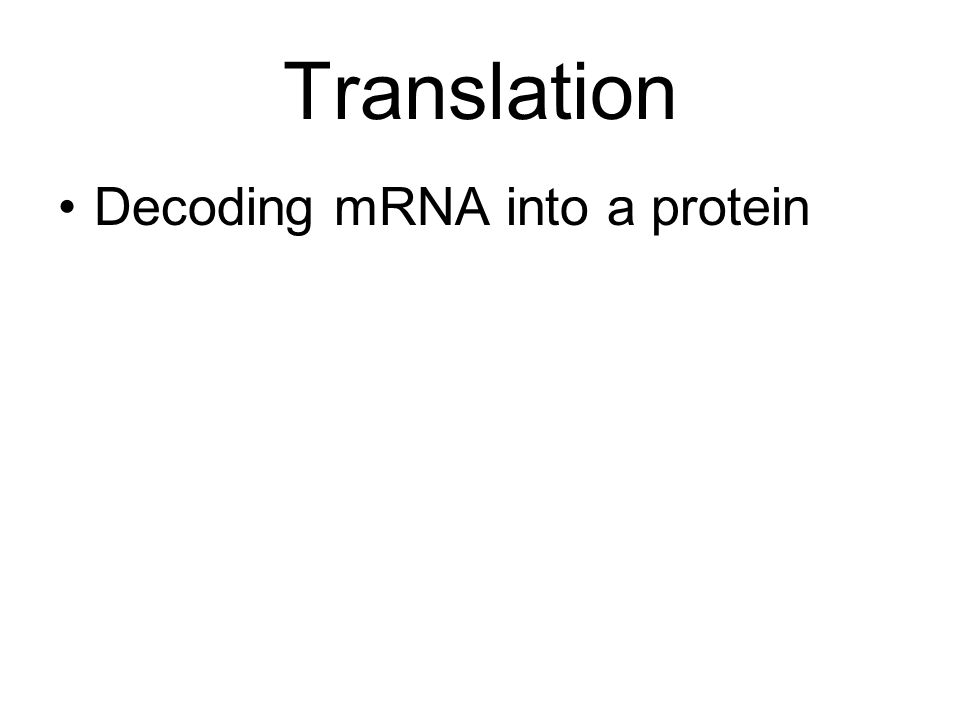 Translation Decoding mRNA into a protein