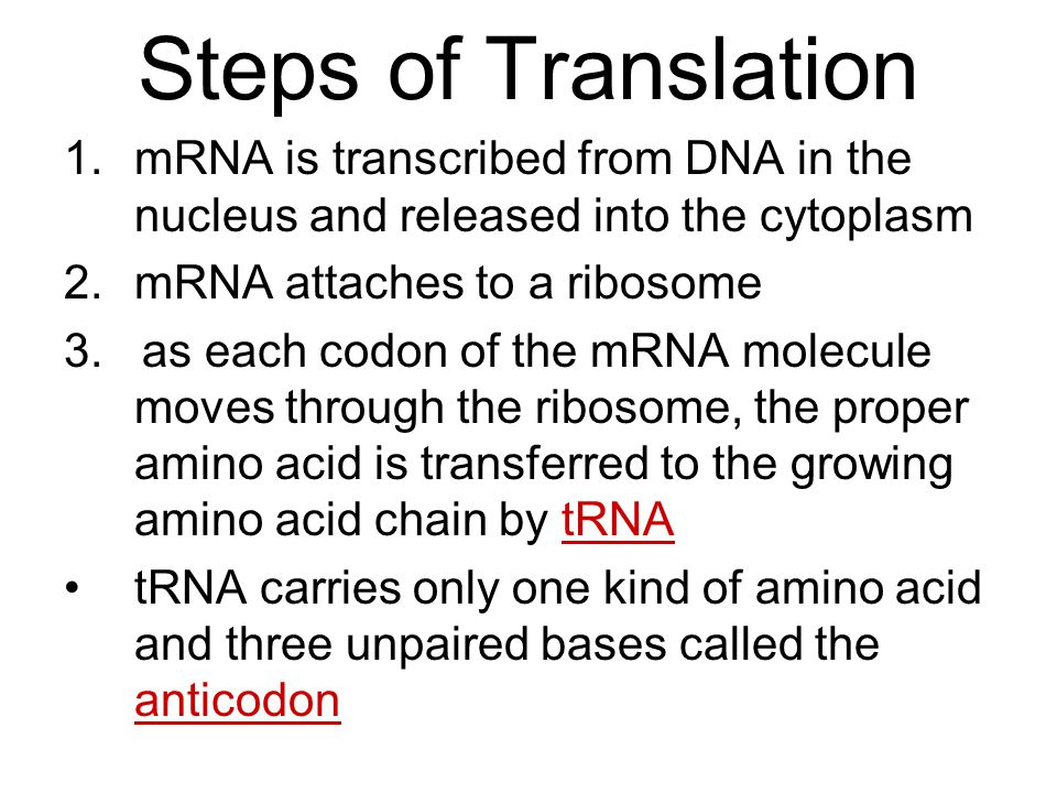 Steps of Translation mRNA is transcribed from DNA in the nucleus and released into the cytoplasm. mRNA attaches to a ribosome.