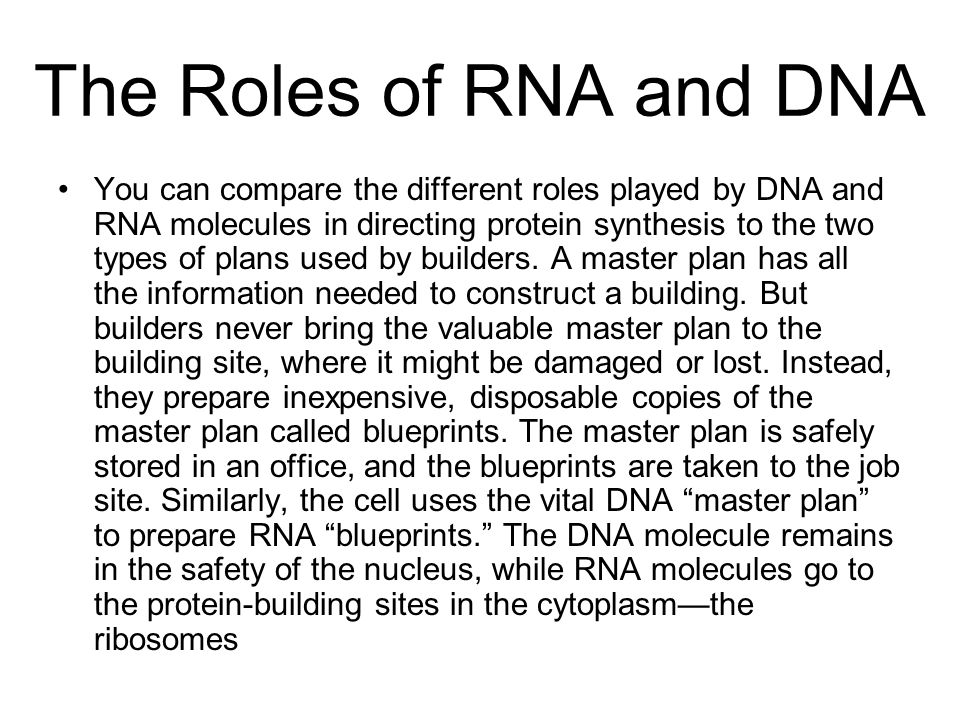 The Roles of RNA and DNA