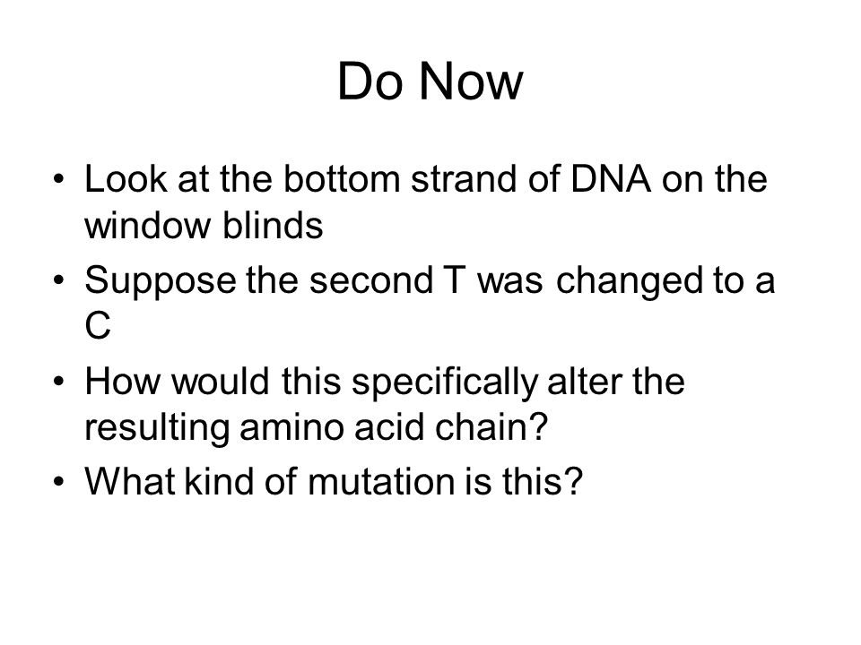 Do Now Look at the bottom strand of DNA on the window blinds