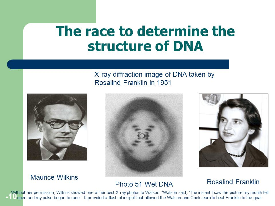 The race to determine the structure of DNA