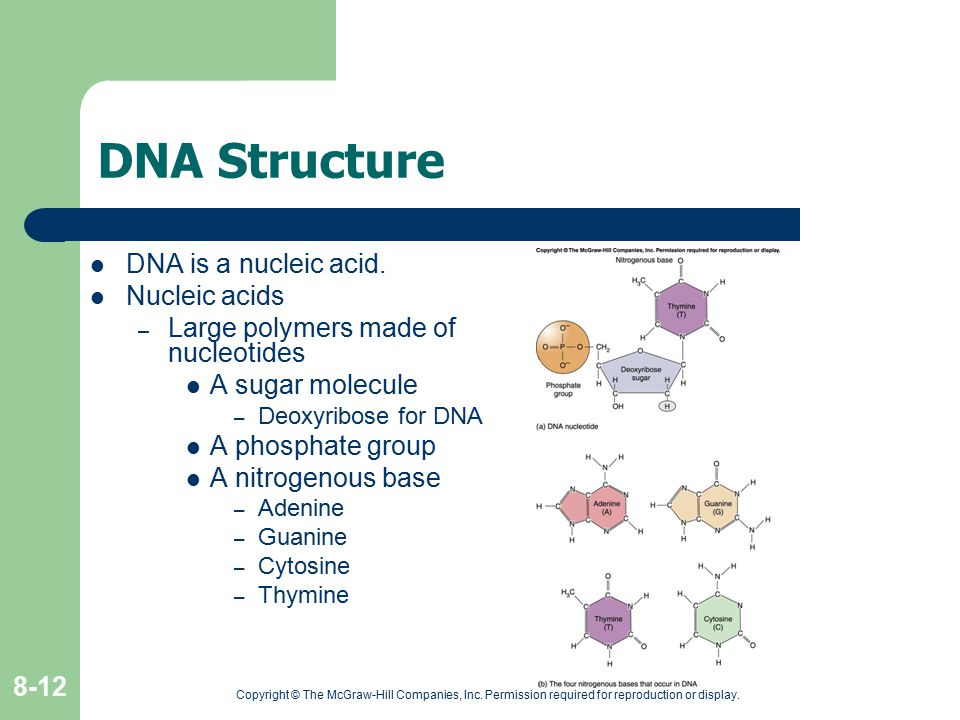 DNA Structure DNA is a nucleic acid. Nucleic acids
