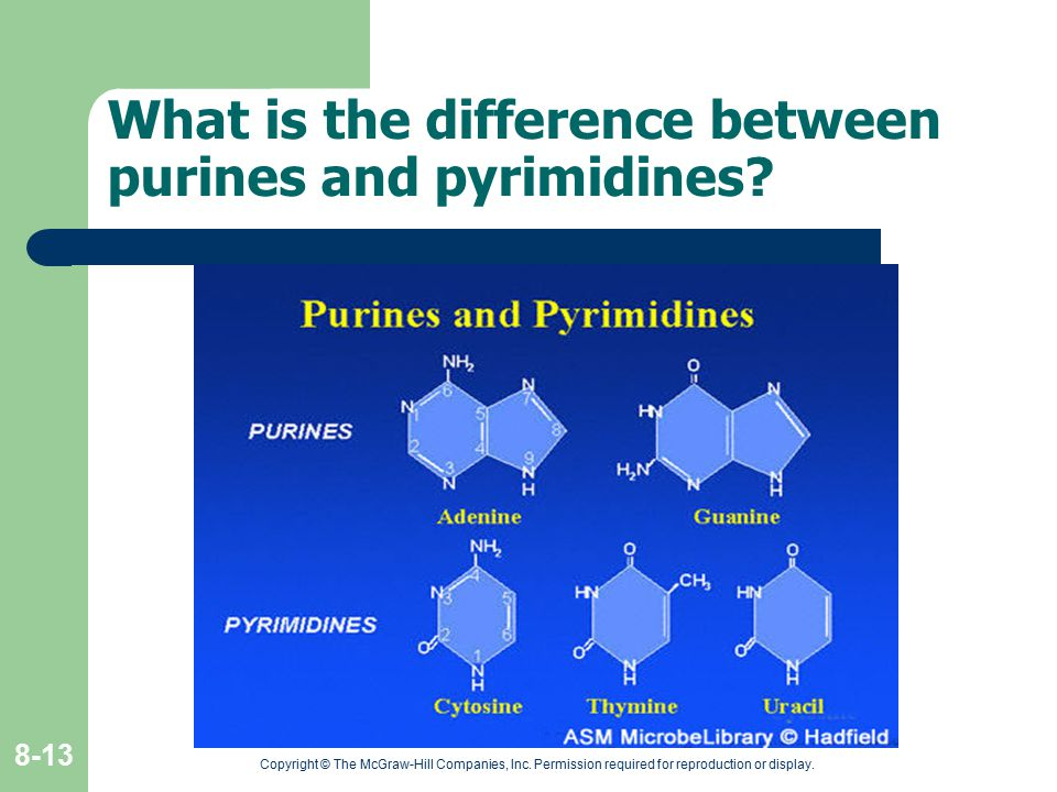 What is the difference between purines and pyrimidines