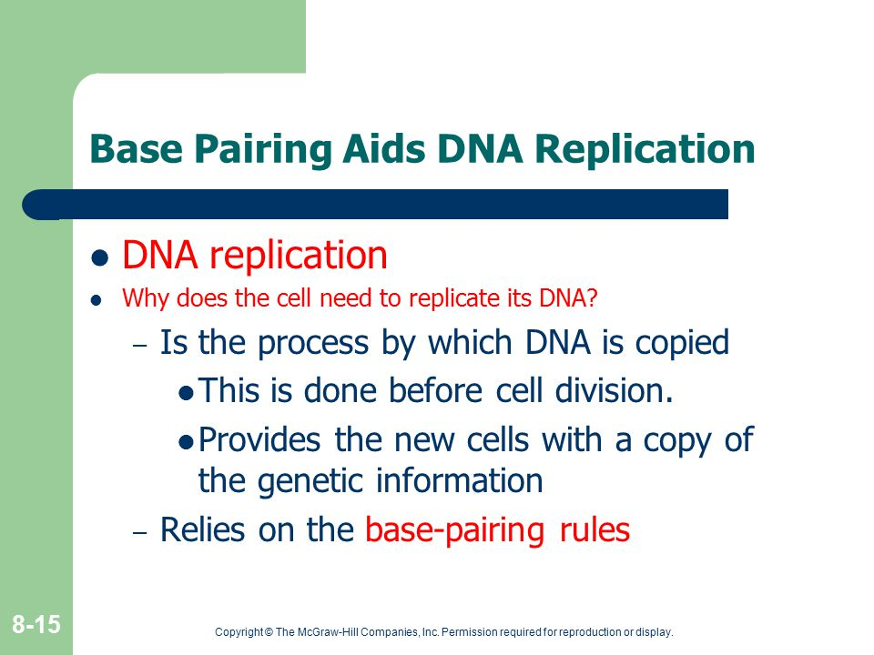 Base Pairing Aids DNA Replication