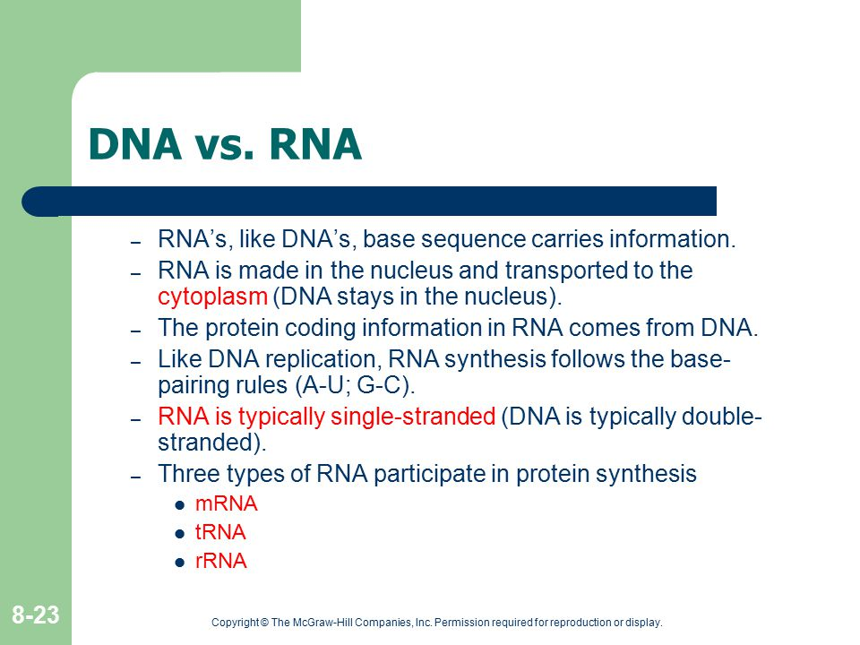 DNA vs. RNA RNA's, like DNA's, base sequence carries information.