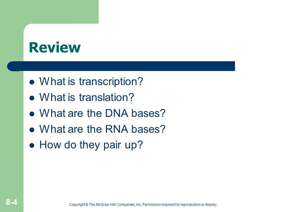 Review What is transcription What is translation