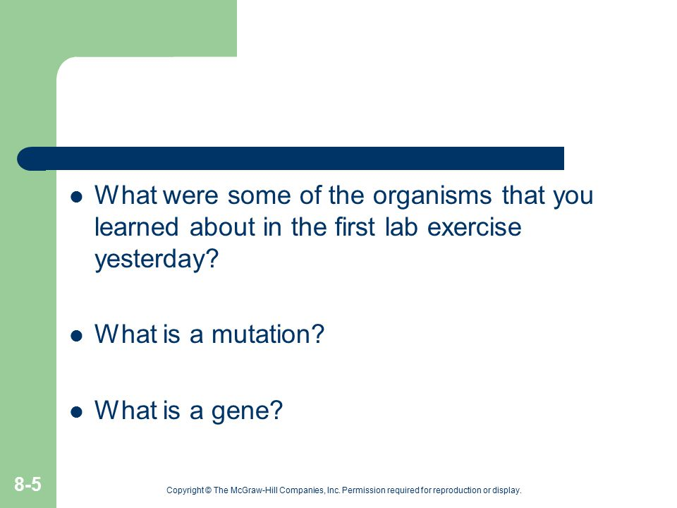What were some of the organisms that you learned about in the first lab exercise yesterday