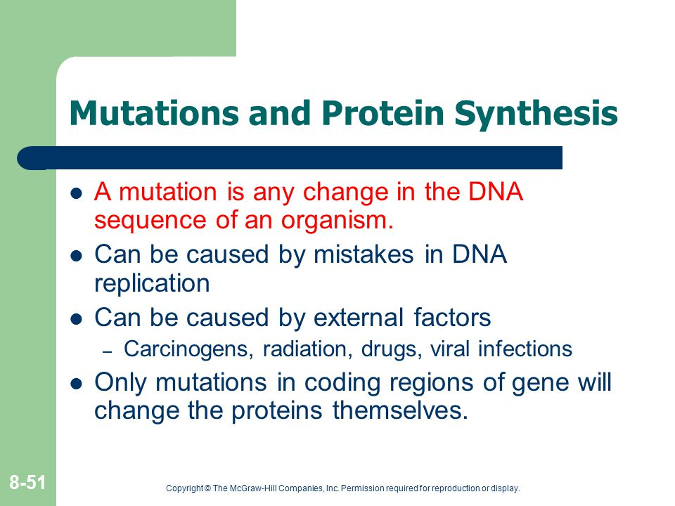 Mutations and Protein Synthesis
