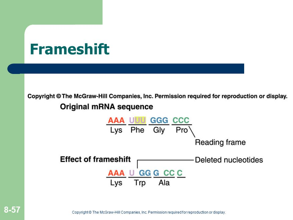Frameshift Copyright © The McGraw-Hill Companies, Inc.