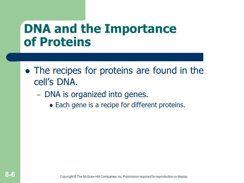DNA and the Importance of Proteins