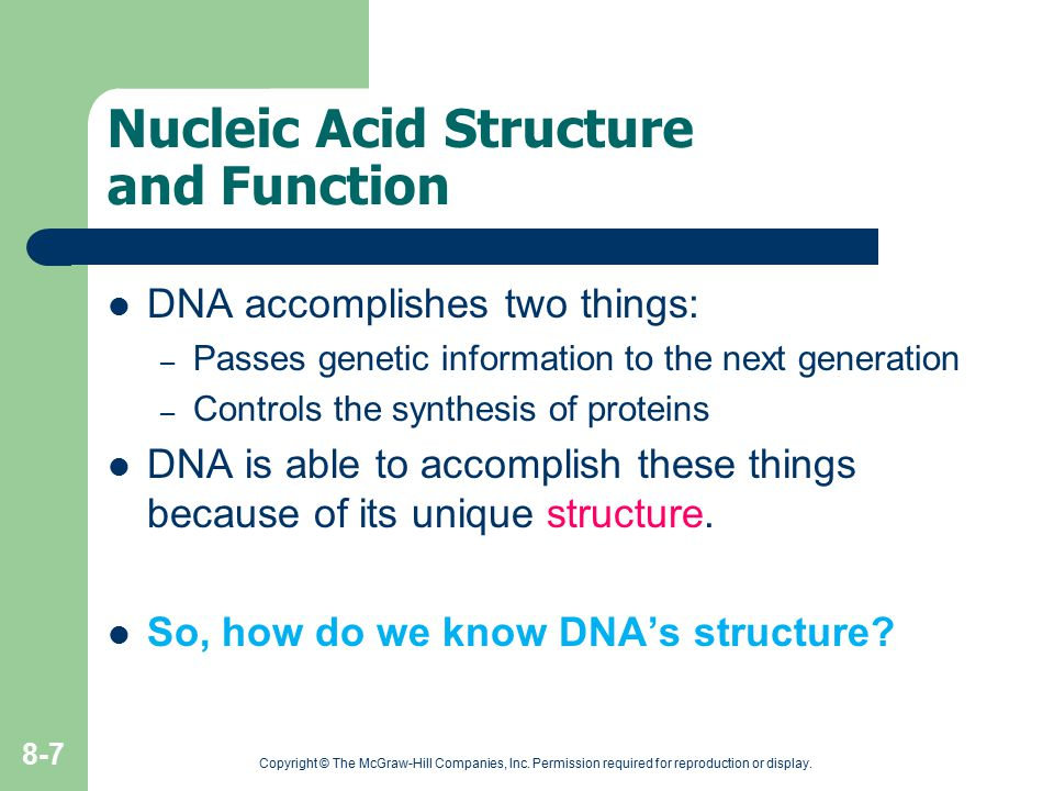 Nucleic Acid Structure and Function