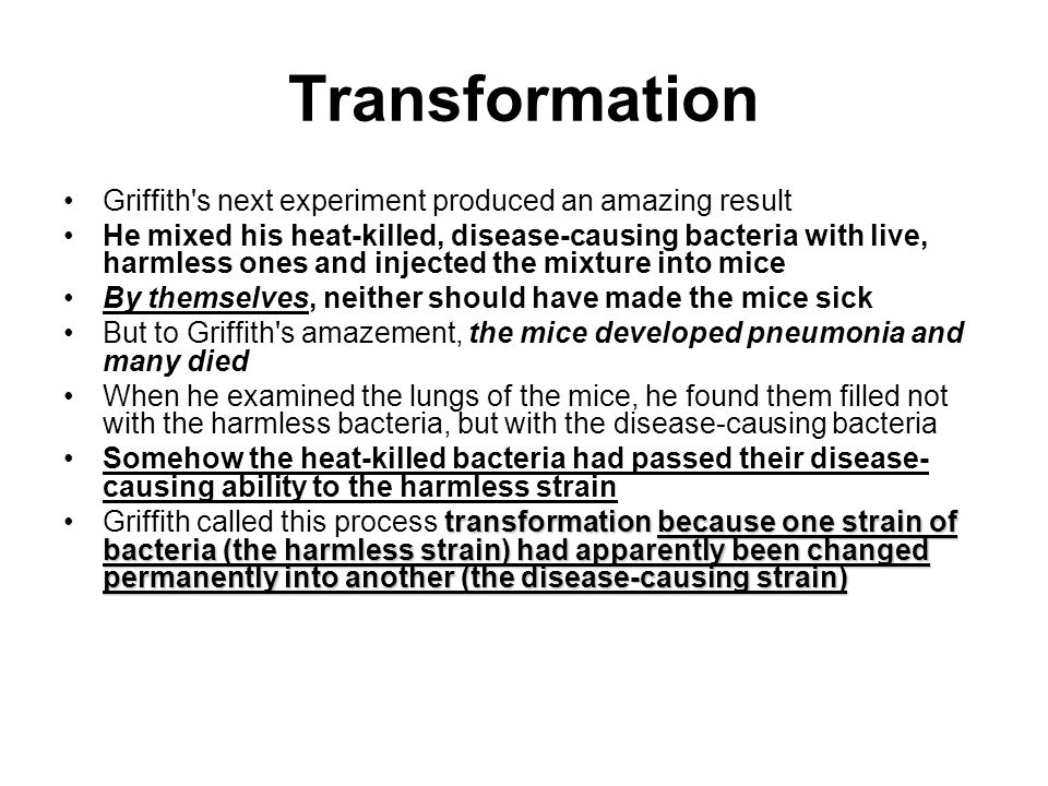 Transformation Griffith s next experiment produced an amazing result