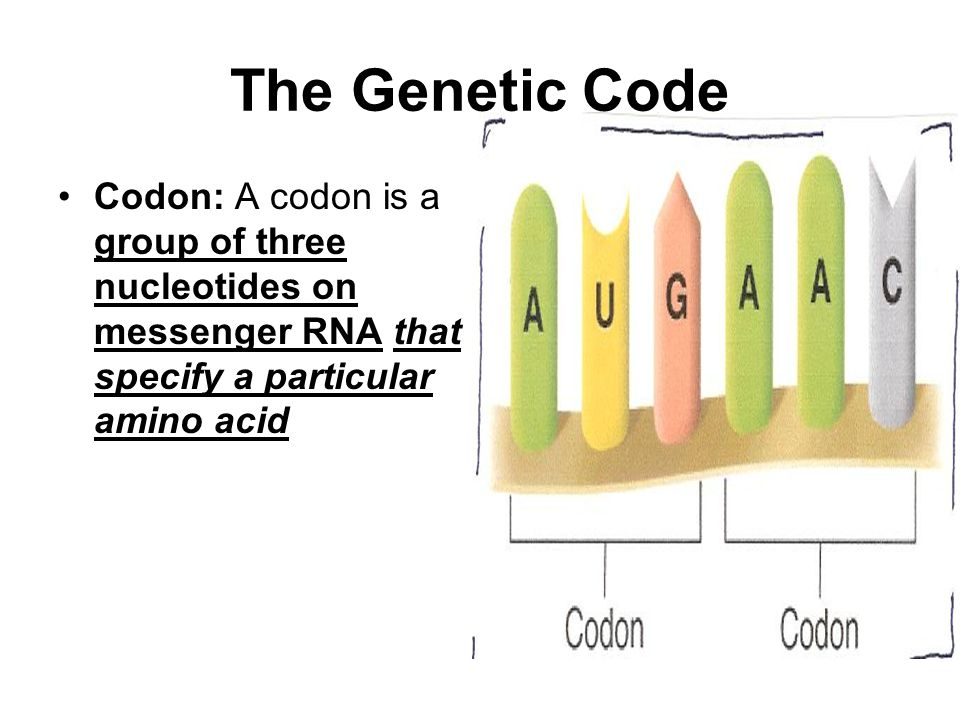 The Genetic Code Codon: A codon is a group of three nucleotides on messenger RNA that specify a particular amino acid.