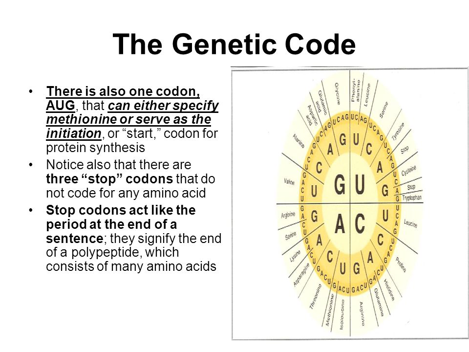 The Genetic Code There is also one codon, AUG, that can either specify methionine or serve as the initiation, or start, codon for protein synthesis.