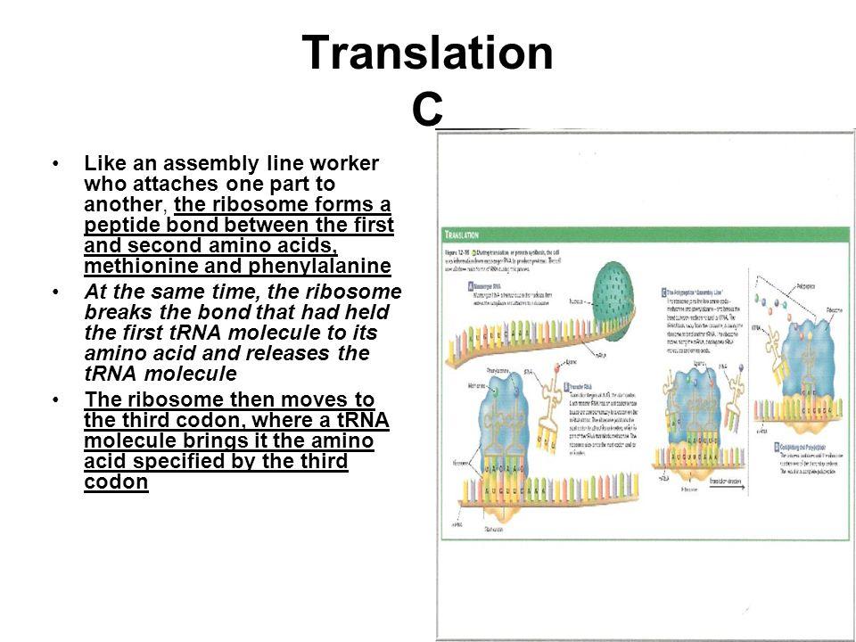 Translation C