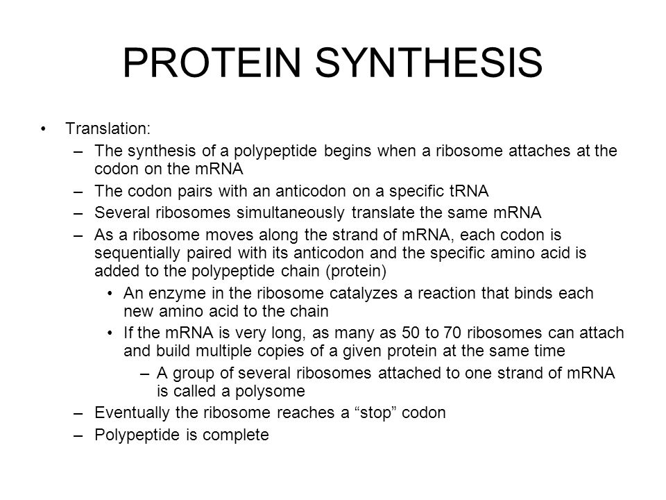 PROTEIN SYNTHESIS Translation: