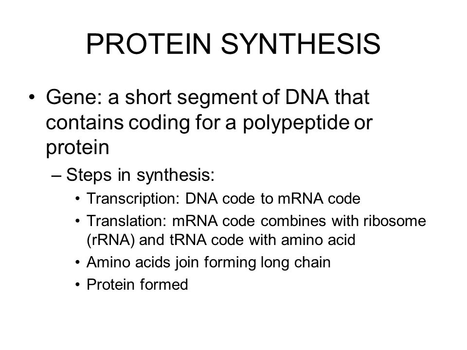 PROTEIN SYNTHESIS Gene: a short segment of DNA that contains coding for a polypeptide or protein. Steps in synthesis: