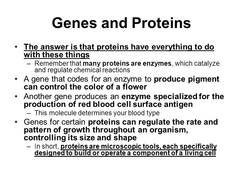 Genes and Proteins The answer is that proteins have everything to do with these things.