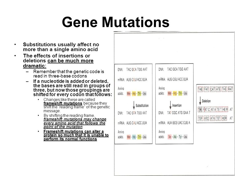 Gene Mutations Substitutions usually affect no more than a single amino acid. The effects of insertions or deletions can be much more dramatic: