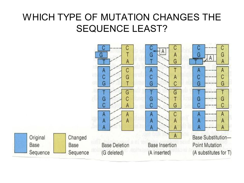 WHICH TYPE OF MUTATION CHANGES THE SEQUENCE LEAST