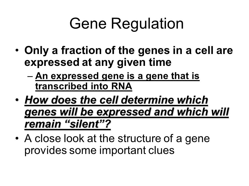 Gene Regulation Only a fraction of the genes in a cell are expressed at any given time. An expressed gene is a gene that is transcribed into RNA.