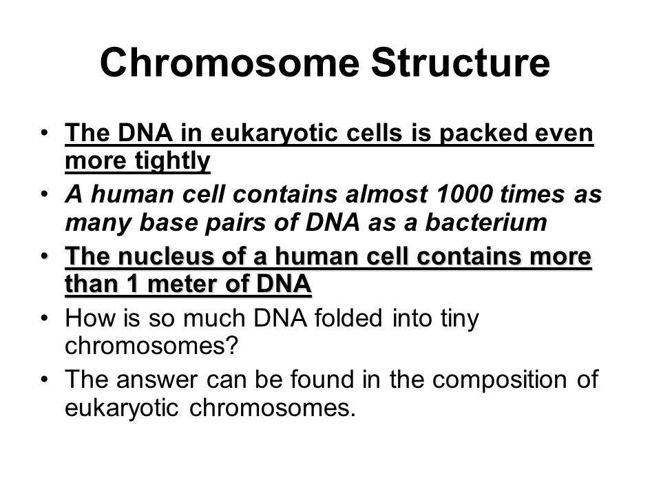 Chromosome Structure The DNA in eukaryotic cells is packed even more tightly.