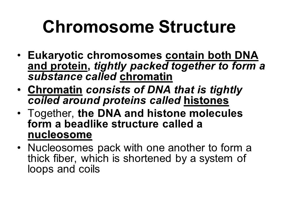 Chromosome Structure Eukaryotic chromosomes contain both DNA and protein, tightly packed together to form a substance called chromatin.