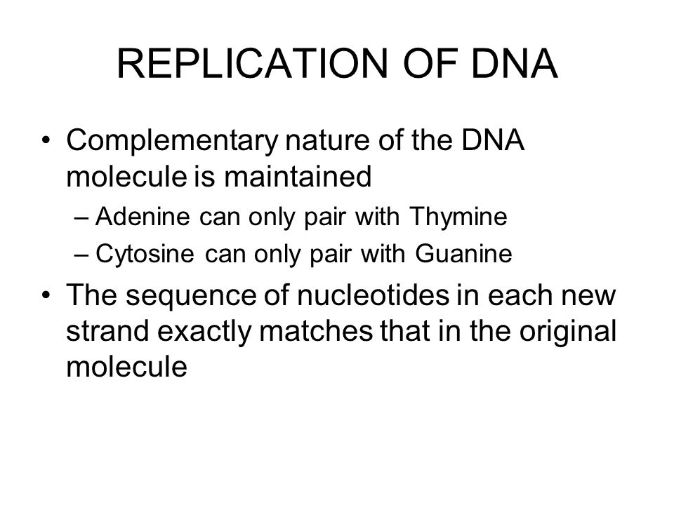 REPLICATION OF DNA Complementary nature of the DNA molecule is maintained. Adenine can only pair with Thymine.