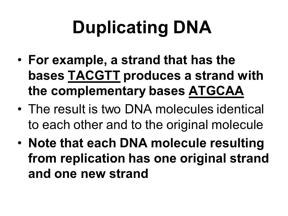 Duplicating DNA For example, a strand that has the bases TACGTT produces a strand with the complementary bases ATGCAA.