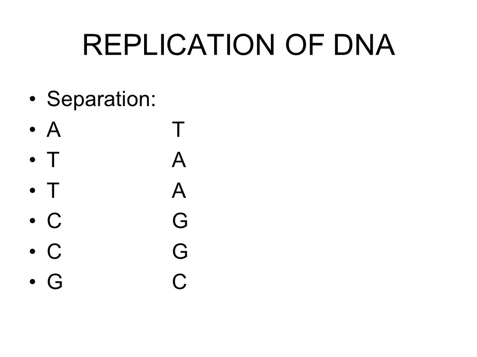 REPLICATION OF DNA Separation: A T T A C G G C
