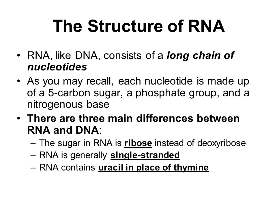 The Structure of RNA RNA, like DNA, consists of a long chain of nucleotides.