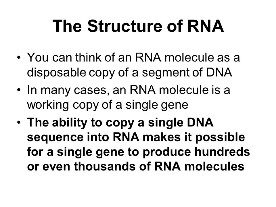 The Structure of RNA You can think of an RNA molecule as a disposable copy of a segment of DNA.
