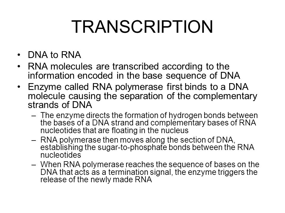 TRANSCRIPTION DNA to RNA