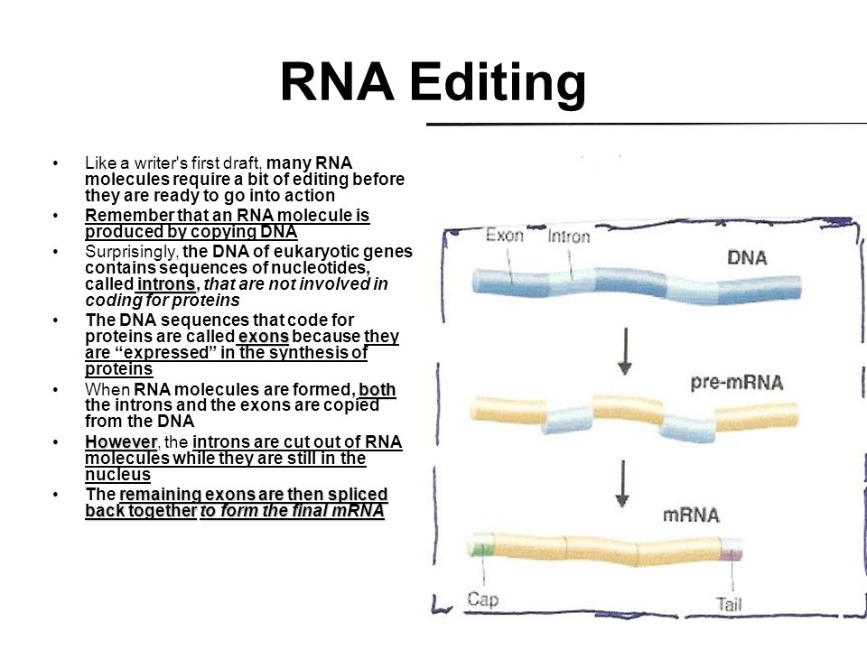 RNA Editing Like a writer s first draft, many RNA molecules require a bit of editing before they are ready to go into action.