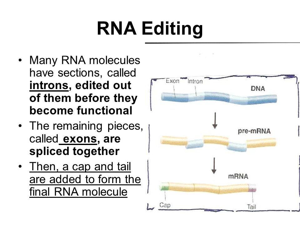 RNA Editing Many RNA molecules have sections, called introns, edited out of them before they become functional.