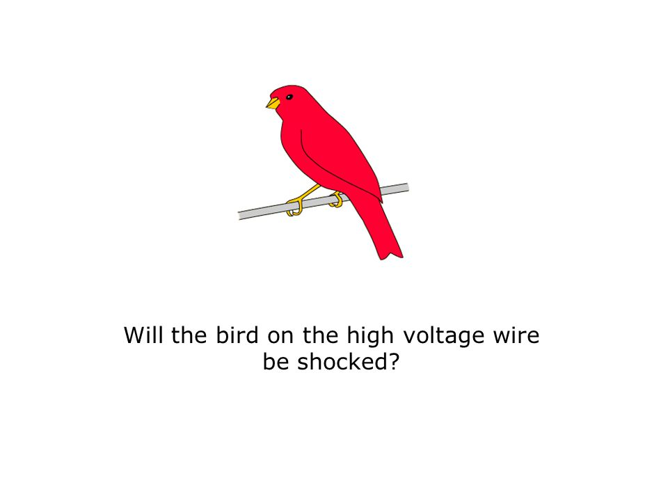 Will the bird on the high voltage wire be shocked